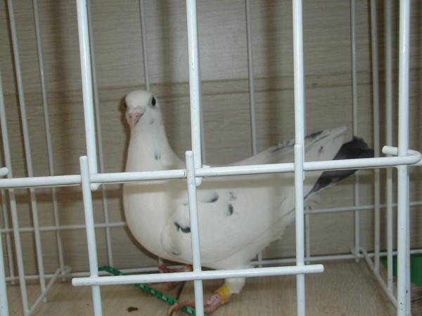 Femme cherche femme Pigeon - Rencontre gratuite Pigeon